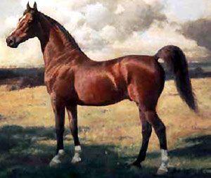 Селянин, який мав коня