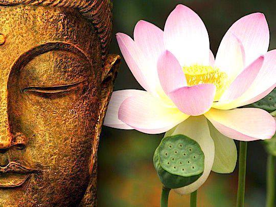 Невичерпна мудрість уроків будди