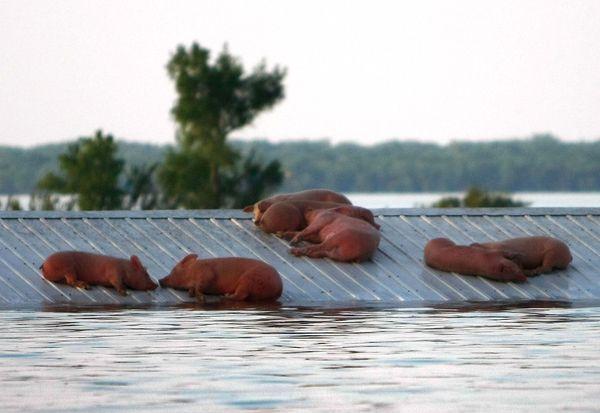 Порятунок від повені